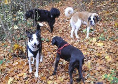 hund-und-Elebnisspaziergang