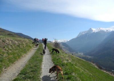 hund-und-Erlebnsispaziergang