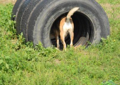hund-und-Hund-Reif_Ungarn