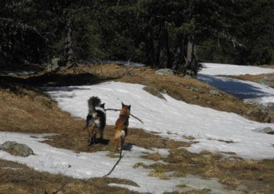 hund-und-Hundebeobachtung