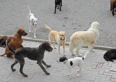 hund-und-Hundepension